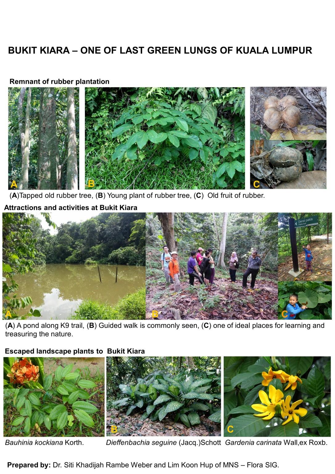 Earthday Bukit Kiara-GREEN LUNG