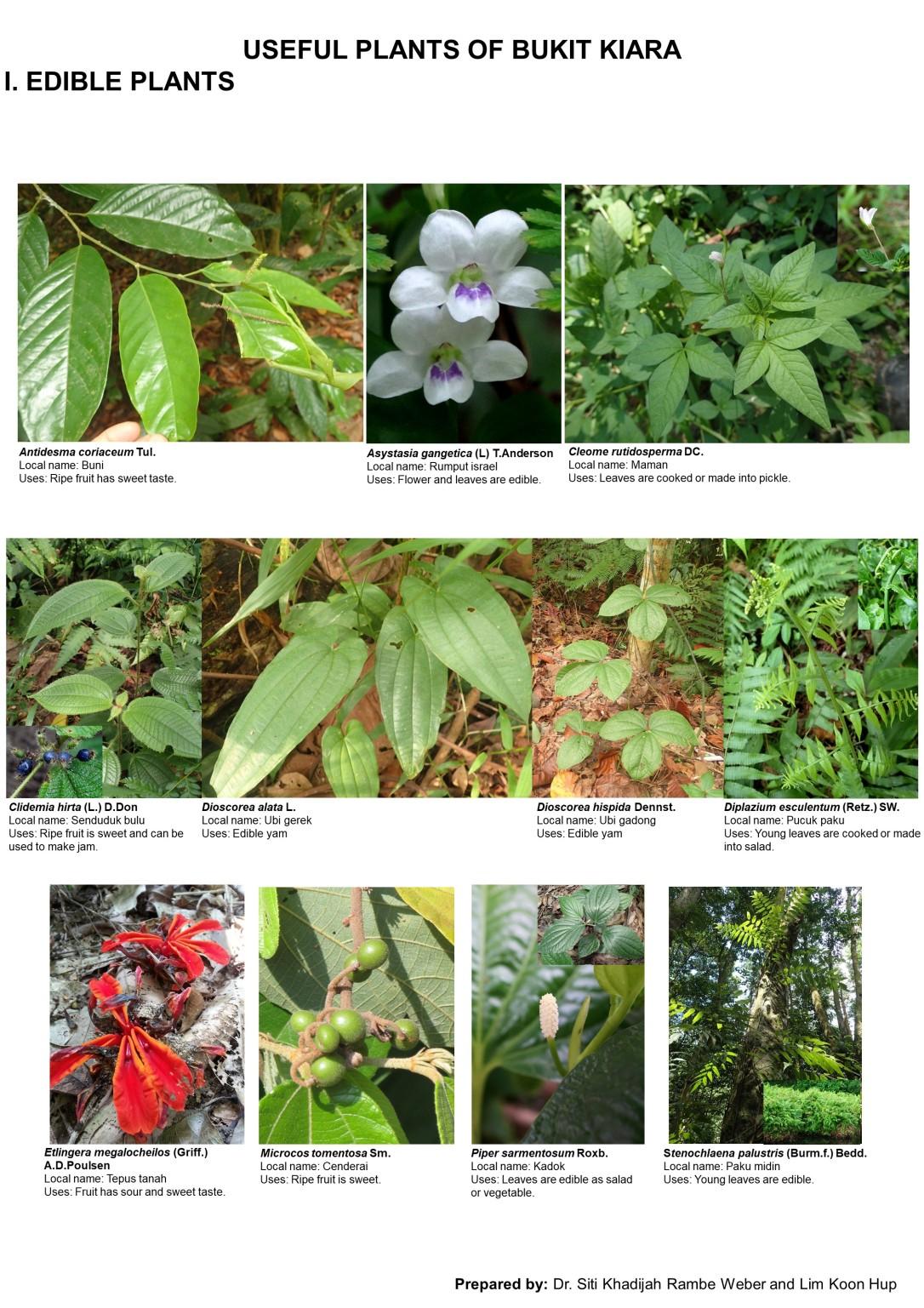Edible-Useful plants of Bukit Kiara