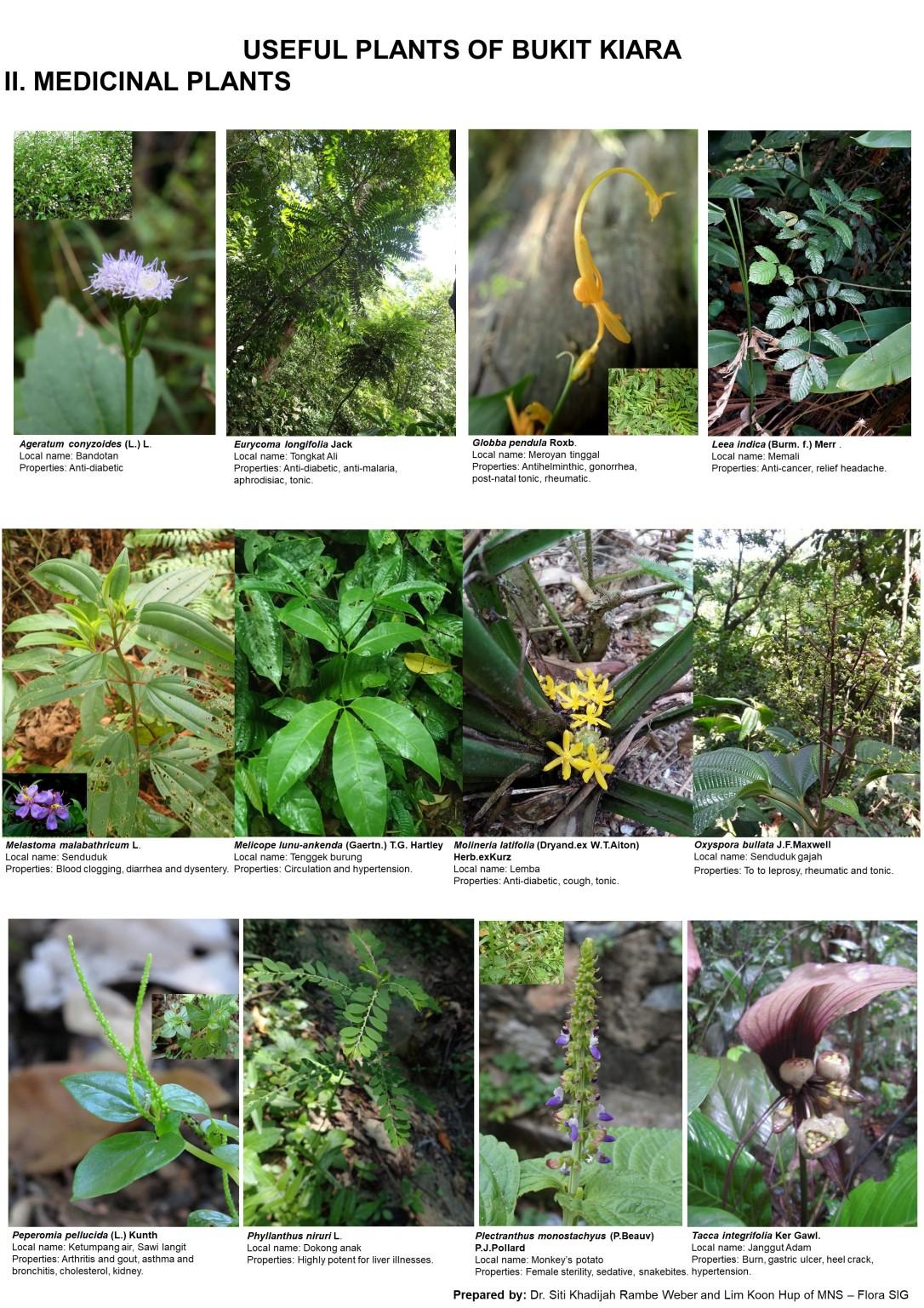 Medicinal plants of BK